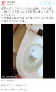 金魚をトイレに流した「りにゃボコ」
