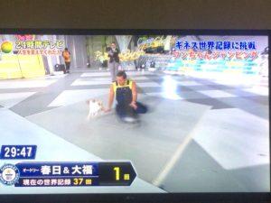 24時間テレビでオードリー春日の蹴りが犬に直撃